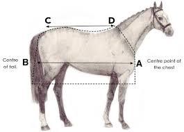 Horse Size Guide Horseware Ireland