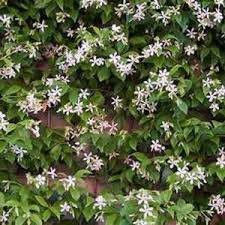 Better Housekeeper Blog  All Things Cleaning Gardening Cooking Climbing Plant For Shade