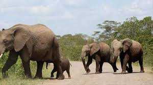Zimbabwe gov't allegedly sold <b>baby elephants</b> to China