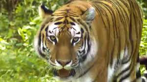 live jungle animals.  Live Jungle Animals   Learn For Kids In Live I