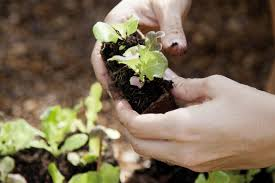 Beware Of These Common Gardening Mistakes Complete Wellbeing