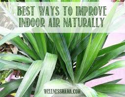 best ways to improve indoor air naturally sing houseplants that are safe for children and pets