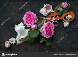 Resultado de imagen de tijeras y una rosa