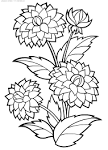 Фото цветов для раскраски 24