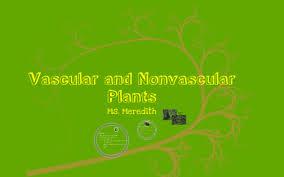 Venn Diagram Of Vascular And Nonvascular Plants Vascular And Nonvascular Plants By Meredith Redlin On Prezi
