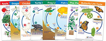 Newpath Learning 94 1504 Life Cycles Bulletin Board Chart Set Pack Of 8