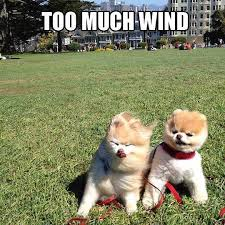 Ah It's a Windy Day | Funny Pictures, Quotes, Memes, Jokes via Relatably.com