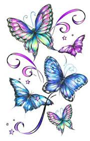 Image result for butterfly photo