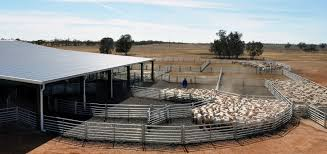 Sheep Corral Design Proway Cattle Yards Sheep Yards Livestock Equipment