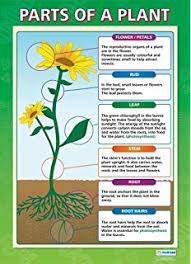 Science Related Chart Amazon Com Plants Poster Set Pack Of 2 Science