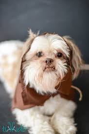 Dog Costume Patterns Awesome Easy Ewok No Sew Dog Costume Tutorial Tikkido