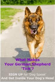 sign up for the dog speak newsletter