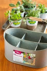 Easy Indoor Herb Garden -- I was an indoor container gardening failure,  until I