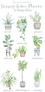 Tips on keeping indoor plants alive