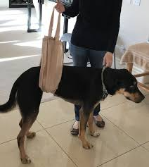 an easy diy grocery bag dog support harness