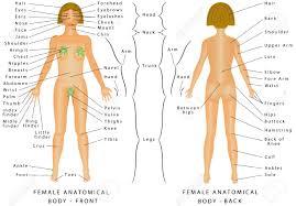 Woman Anatomy Chart Regions Of Female Body Female Body Front And Back Female