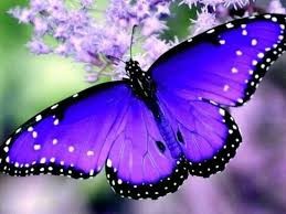 most beautiful butterflies in the world animated. Beautiful Butterflies Most Beautiful Butterflies In The World To Most Beautiful Butterflies In The World Animated