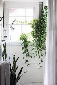 Add A Little Green: Plants In The Bathroom