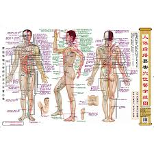 Us 10 5 Humans Dangerous Acupuncture Points Warning Chart For Traditional Chinese Medicine Doctors Chinese Edition In Flip Chart From Office