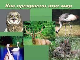 """Презентация на тему: """"Охрана животных."""". Скачать бесплатно и без регистрации."""