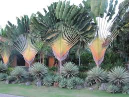 Best Landscaping Designs In Kenya This Is The Front Of The Garden From Kenya Tropical