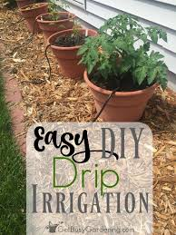 diy sprinkler system new how to install a diy drip irrigation system for potted plants of