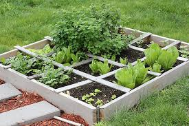 container gardening for beginners. Container Gardening For Beginners A