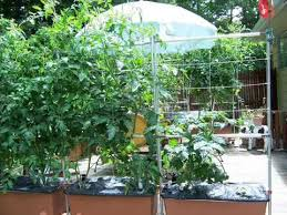 Small Picture Vegetable Garden Designs For Small Yards I Vegetable Garden