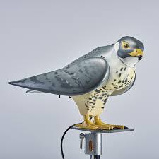 r falcon bird control bird deter