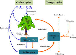 Effects Of Reactive Nitrogen Deposition On Terrestrial And Aquatic