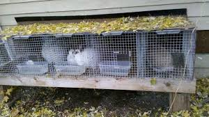 this is an awesome idea for a rabbit hutch if you a building or garage that you d like to keep your bunnies in then definitely consider this hutch