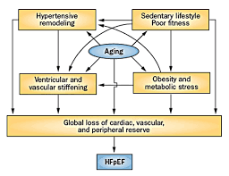 Right Vs Left Sided Heart Failure Chart Heart Failure With Preserved Ejection Fraction Hfpef More