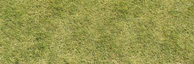 30 Free High Resolution Grass Textures Naldz Graphics