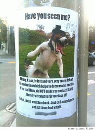 how to make lost dog flyers the 10 most awesome lost pet flyers nextdaypins free design