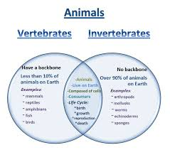 Example Of Venn Diagram In English Learning Ideas Grades K 8 Venn Diagram Vertebrates And