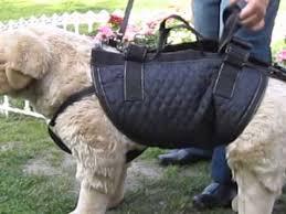 Gehhilfen und tragehilfen unterstützen ihren hund bei krankheit, verletzung, nach operation oder im alter. Tiffys Tasche Tragehilfe Gehhilfe Fur Grosse Hunde Youtube