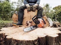 Мешканку Міловського району судитимуть за незаконну порубку лісу