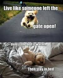 cats and dogs fighting quotes. Cats And Dogs Fighting Quotes Google Search