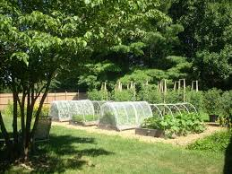 vegetables garden fence ideas for protection. Garden And Patio: Aluminium Wire Installed For Protect Vegetable Ideas With Wooden Square Box Filled Soil Mix, Planning Spacious Backyard Vegetables Fence Protection