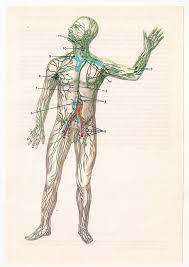 vintage anatomical prints medical diagrams by fromeuropewithlove vintage anatomical prints medical diagrams skull skeleton brain illustrations anatomy art print paper ephemera cyber