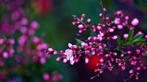 Spring Flowers Wallpapers HD Pictures ...