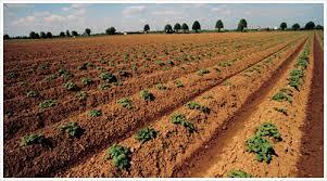Сельское хозяйство Китая АгроНовости сельское хозяйство в  Сельское хозяйство Китая До провозглашения