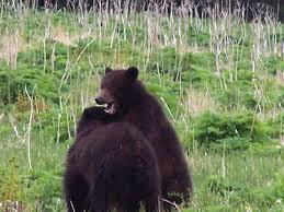 Alaska Wildlife Gallery — Sitka Alaska Outfitters