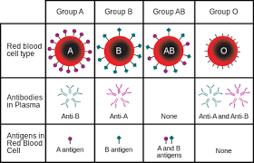 parent blood types chart abo blood group system wikipedia