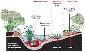 frog bog and pond basics sustainable