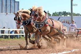 Tracy Barton video clips of horse shows/pulls - Home | Facebook