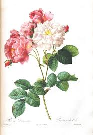 Vintage Floral Print Best 25 Vintage Flower Prints Ideas On Pinterest Vintage Prints