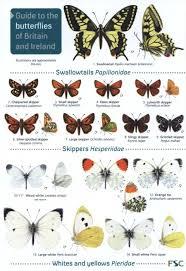 Id Chart Butterflies Of Britain