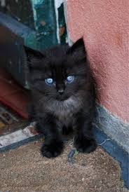 fluffy black kittens with blue eyes. Plain With Black Kitten 1 By Martap84 On DeviantART In Fluffy Black Kittens With Blue Eyes B