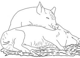 Small Picture Two pigs coloring pages Hellokidscom